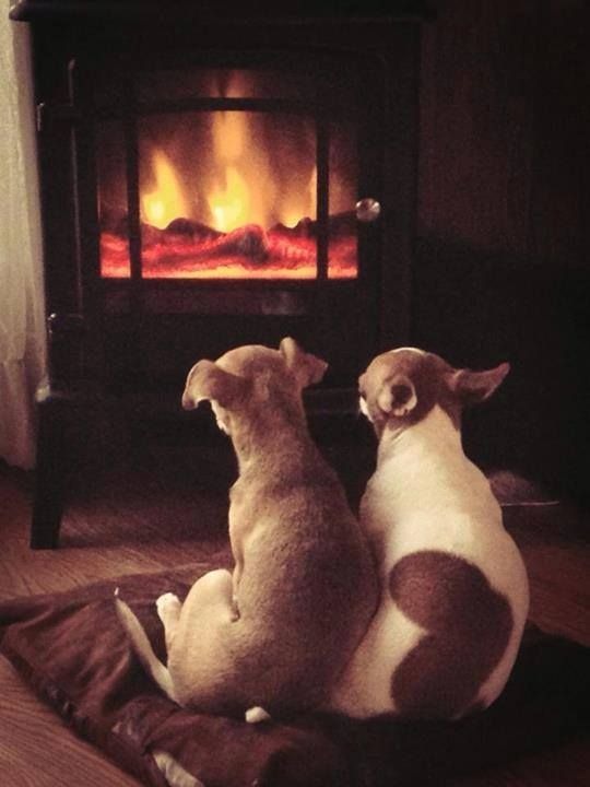 dogs keeping warm