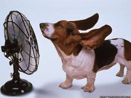 Dog with Fan for Cooling